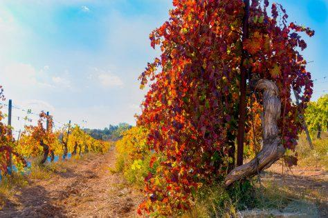 vines- motorcycle tours France